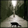 Cats of Marrakesch